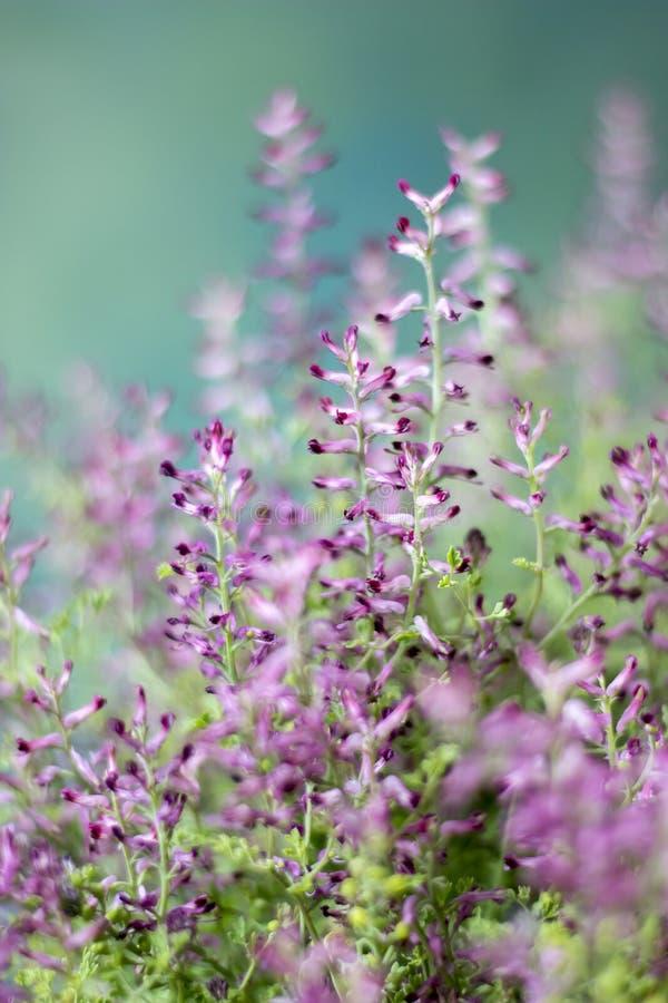 与拷贝空间的开花的野花 免版税图库摄影