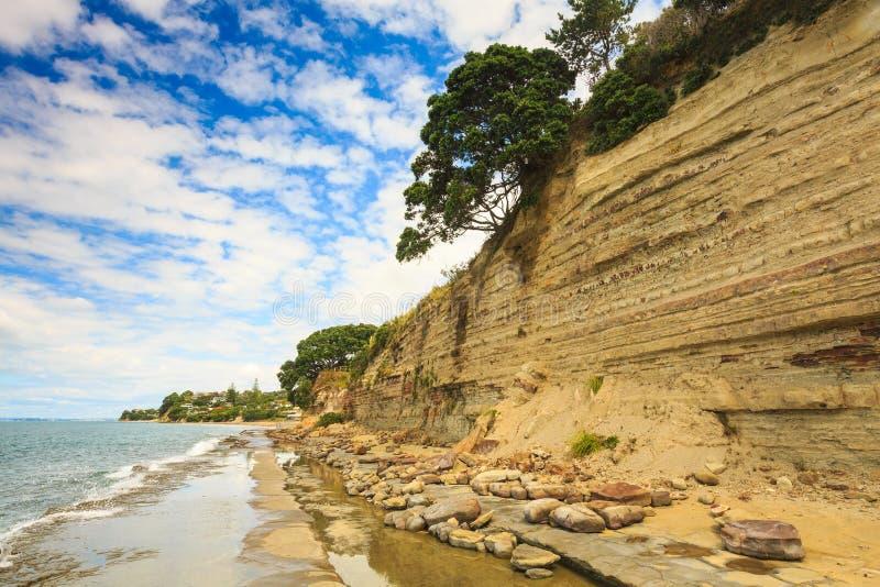 与摇滚乐队和伸出的树的沿海砂岩峭壁 免版税库存照片