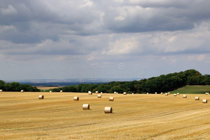 与收获领域,hayrolls,天空蔚蓝,在天际的树的夏天农村风景 r 免版税库存图片