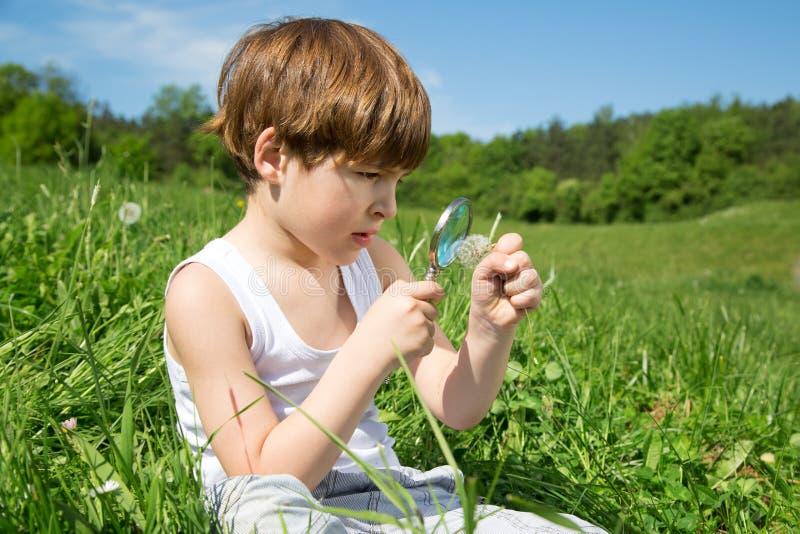 与放大镜的小男孩探索的领域花在美好的绿色领域 免版税库存图片