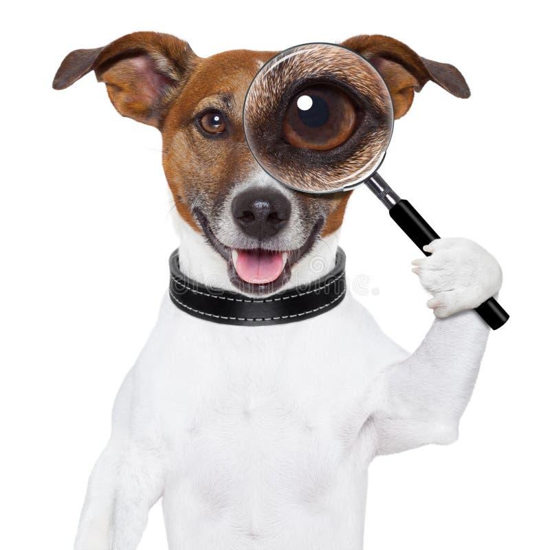 与放大镜的狗 免版税库存照片