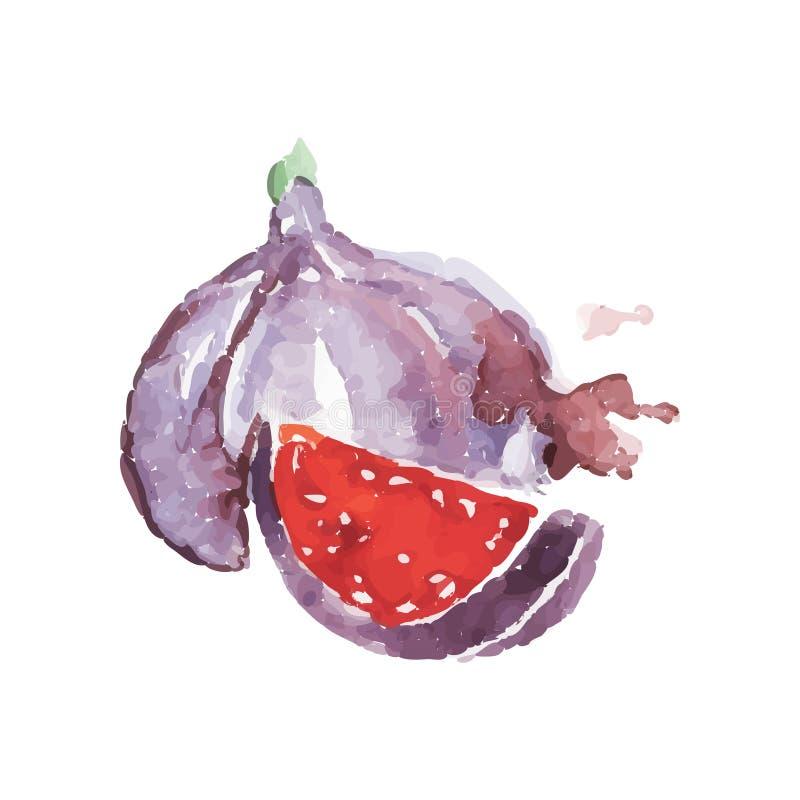 与整个和无花果一点片断的水彩绘画  健康和可口果子 热带有机食品 素食主义者 皇族释放例证
