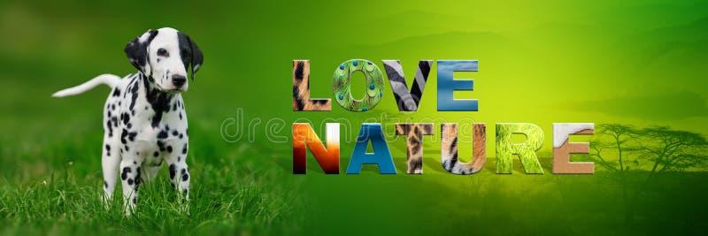 与文本爱自然的狗 免版税库存图片