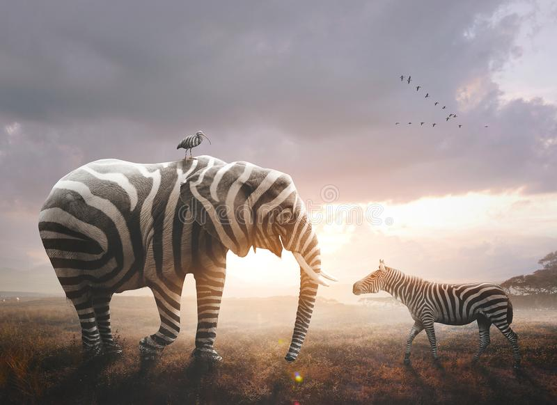 与斑马条纹的大象 免版税图库摄影