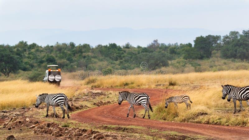 与斑马的徒步旅行队驱动在非洲 图库摄影