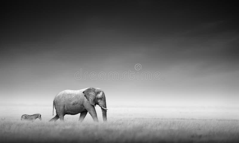 与斑马(艺术性处理)的大象 免版税库存图片