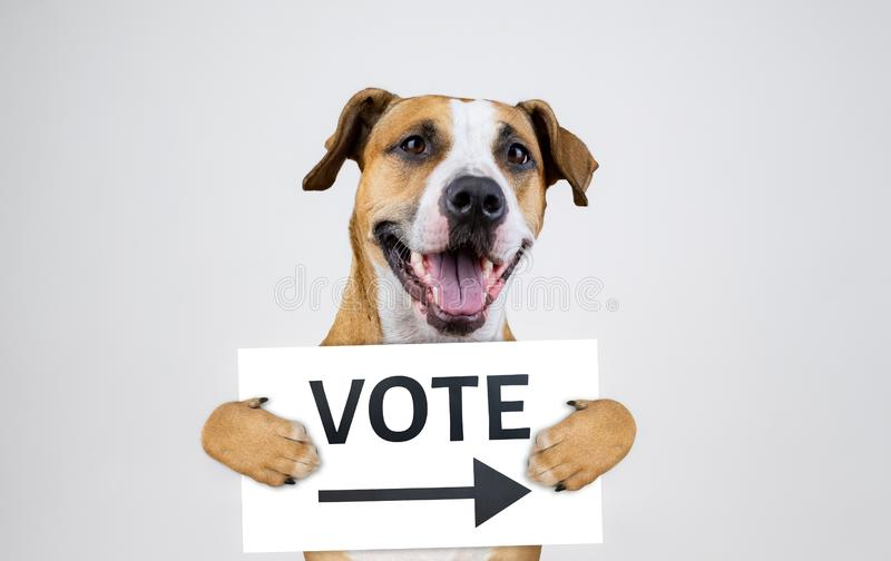 与斯塔福德郡狗狗的美国竞选行动主义概念 免版税库存照片