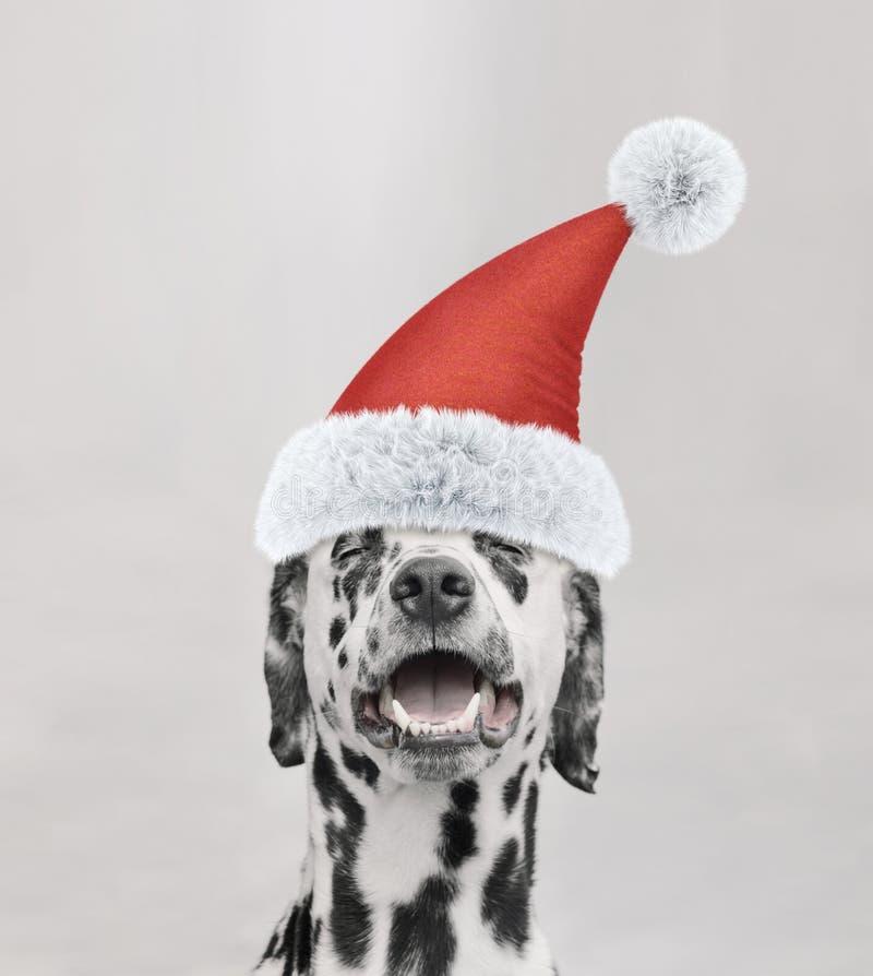 与新年盖帽和愉快的面孔的圣诞老人达尔马希亚狗 免版税库存照片