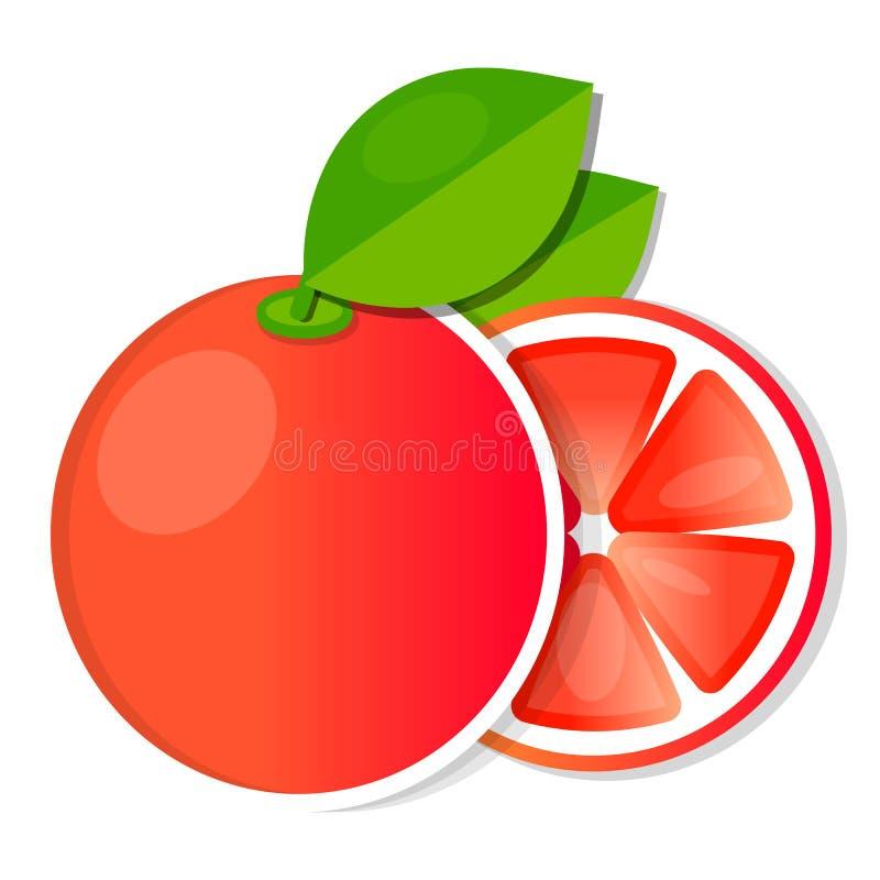与新绿色叶子传染媒介的水多的葡萄柚果子 向量例证
