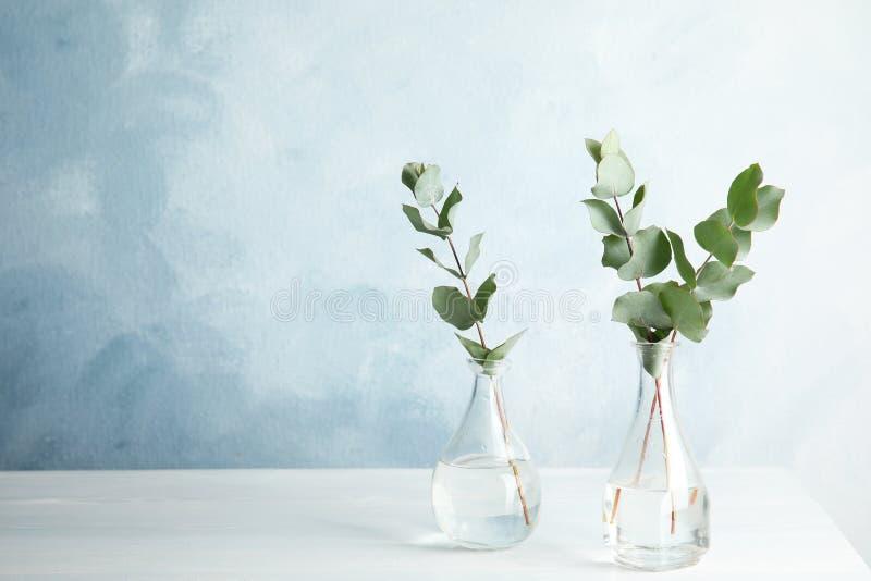 与新鲜的叶子的玉树分支在花瓶 免版税库存图片