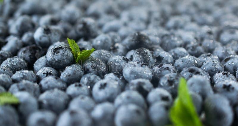 与新鲜的成熟水多的蓝莓特写镜头照片的背景 免版税库存照片