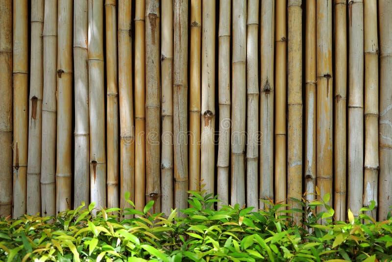 与新鲜的绿色灌木的竹墙壁背景 库存照片