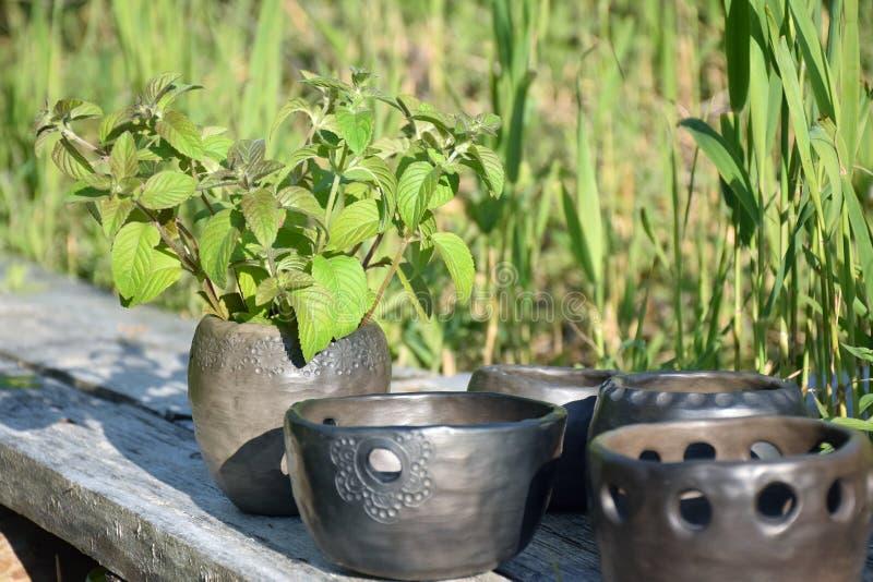 与新鲜的绿色薄荷叶子和黑瓦器杯子特写镜头的夏令时在早晨阳光下 库存照片