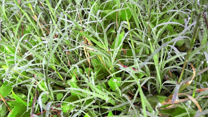 与新鲜的草的凉快的早晨大气 库存照片