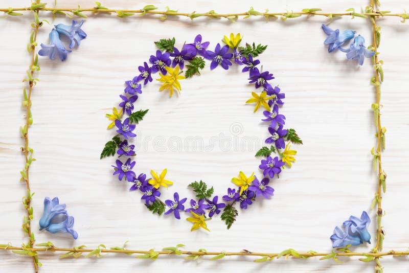 与新鲜的蓝色风信花和hepatica花的春天花卉样式在白色木背景 免版税图库摄影
