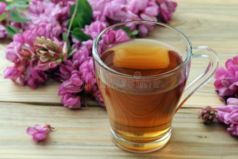 与新鲜的金合欢花的草本自然茶 库存图片