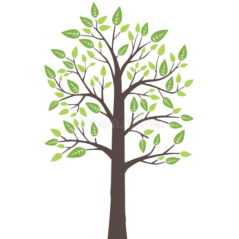 与新鲜的年轻叶子的风格化孤立树 向量例证