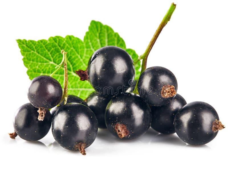 与新鲜绿色的叶子的莓果黑醋栗 库存照片