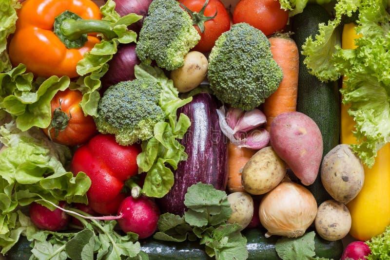 与新绿色的各种各样的菜 免版税库存图片