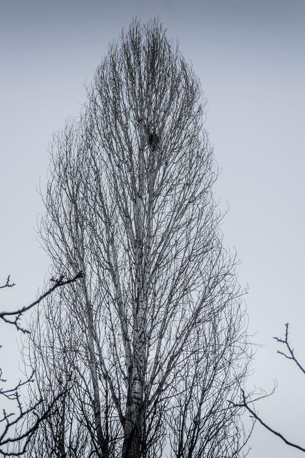 与无言颜色的死的冬天树 免版税库存照片