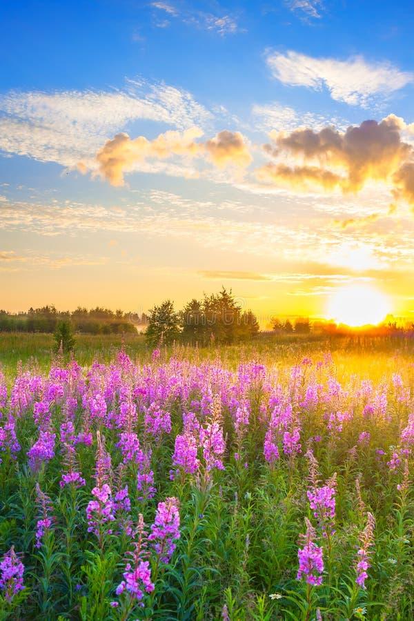 与日出和开花的草甸的农村风景 免版税库存照片