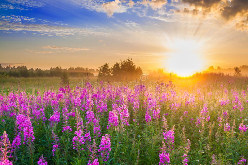 与日出和开花的草甸的农村风景 免版税图库摄影