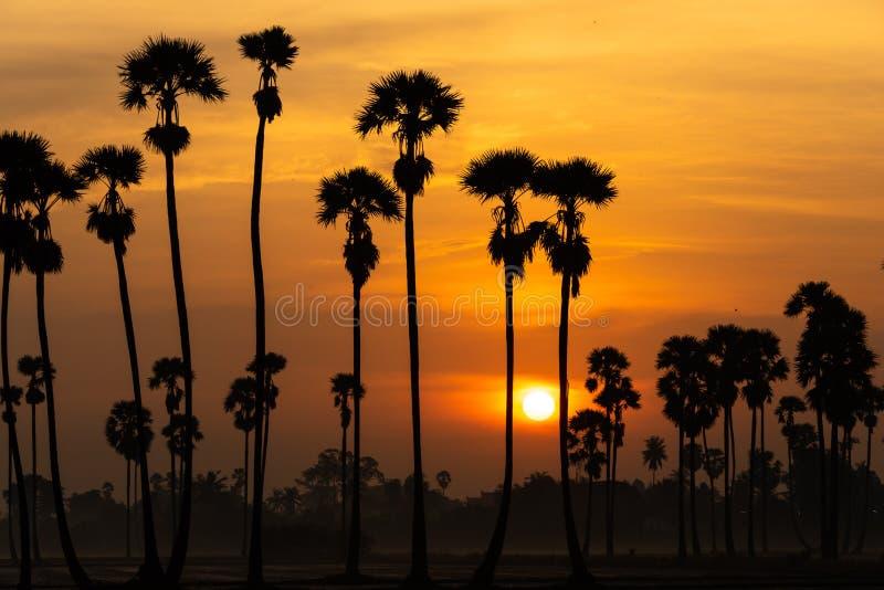 与日出的桄榔树 库存图片