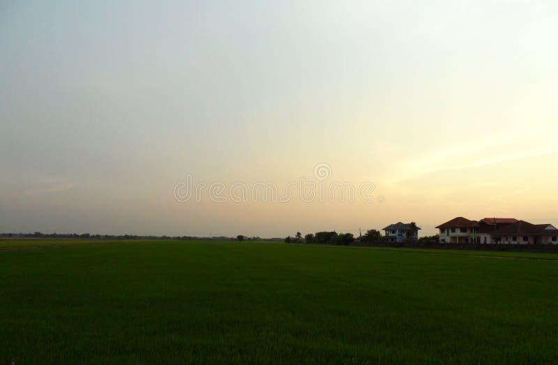 与日出的美好的米领域, 图库摄影