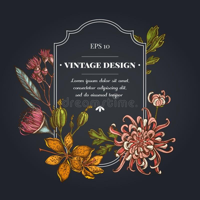 与日本菊花,黑莓百合,玉树花的黑暗的徽章设计 向量例证