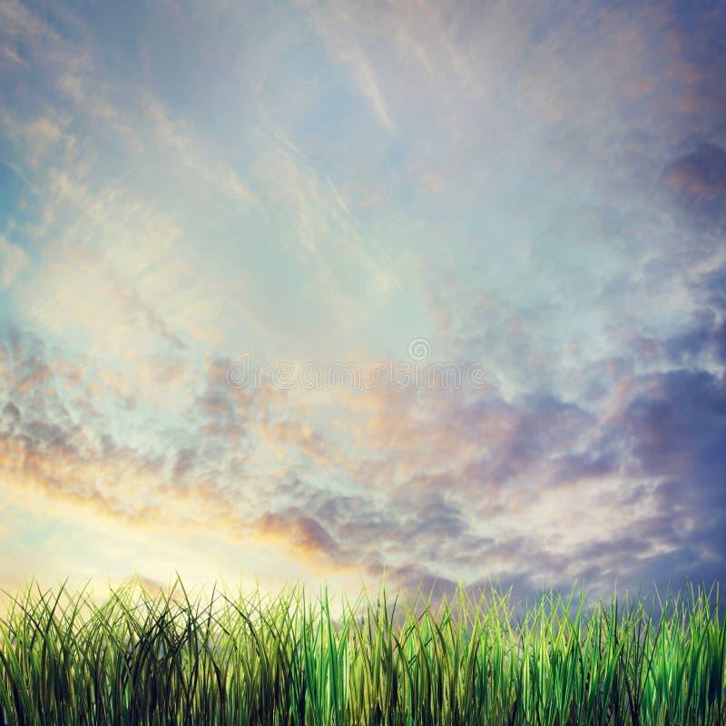 与日落多云天空和草的剧烈的夏天风景 库存图片