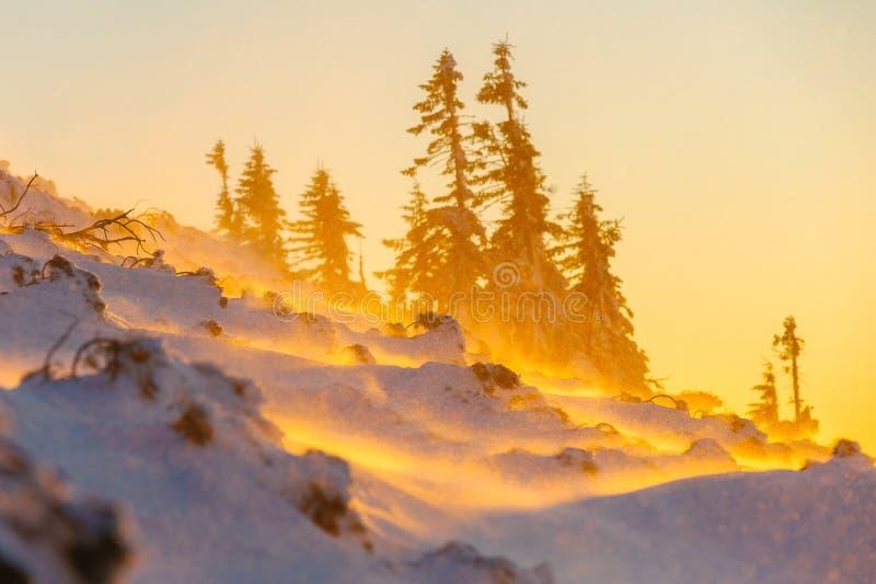 与日落温暖的光的暴风雪在南部的babia山 免版税库存照片