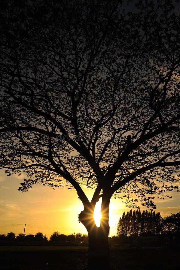 与日落的大树 免版税库存图片