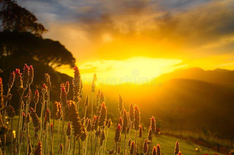 与日落的花在背景中 免版税库存照片