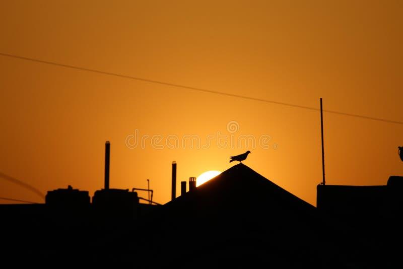 与日落的Masakali 免版税库存照片