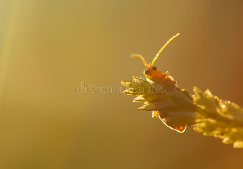 与早晨光的昆虫 免版税库存照片