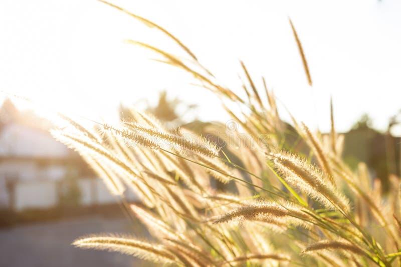 与早晨室外天光的草花 免版税图库摄影