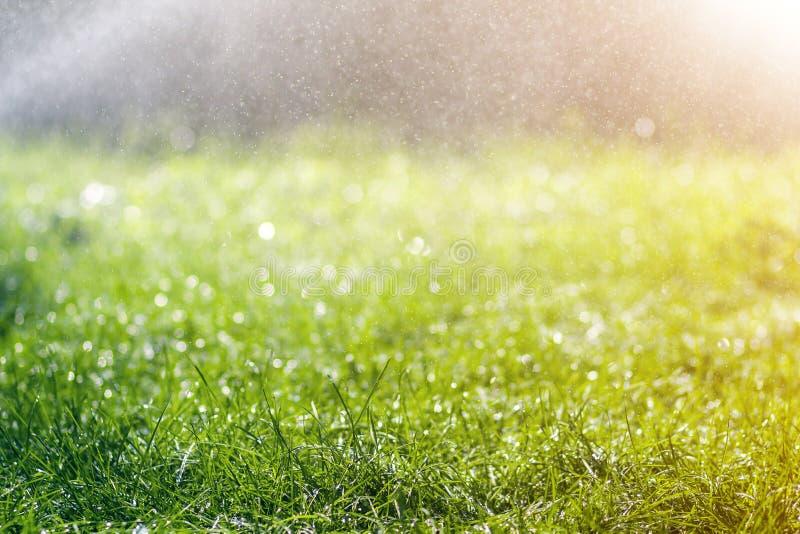 与早晨雨水下跌的下落的绿色新鲜的草  与bokeh和被弄脏的背景的美好的夏天背景 低 库存照片