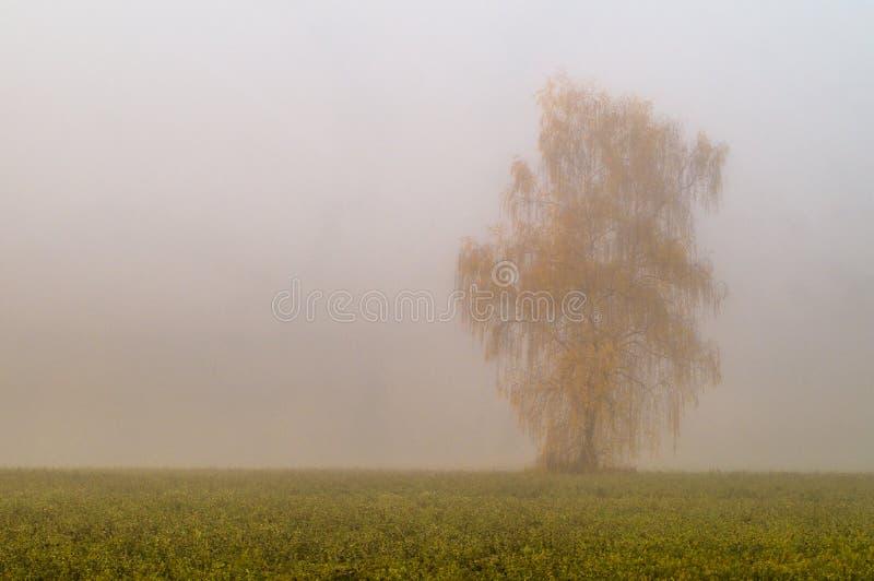与早晨雾的秋天风景在中央俄罗斯 库存图片