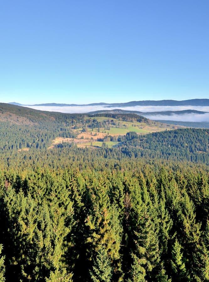 与早晨雾的风景在谷 免版税库存图片