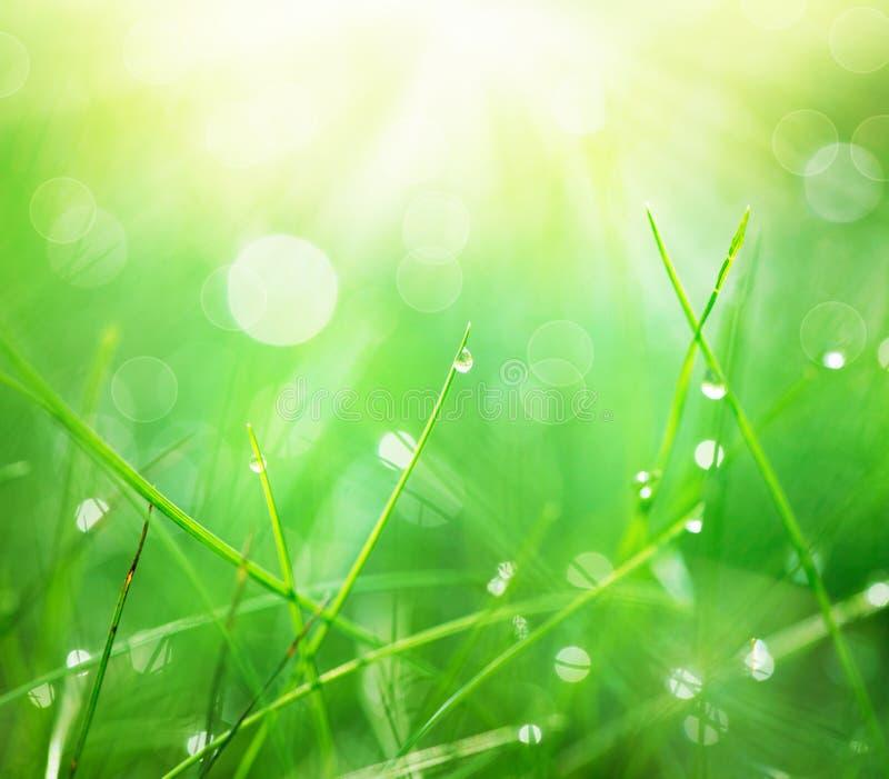 与早晨露滴的草 库存图片