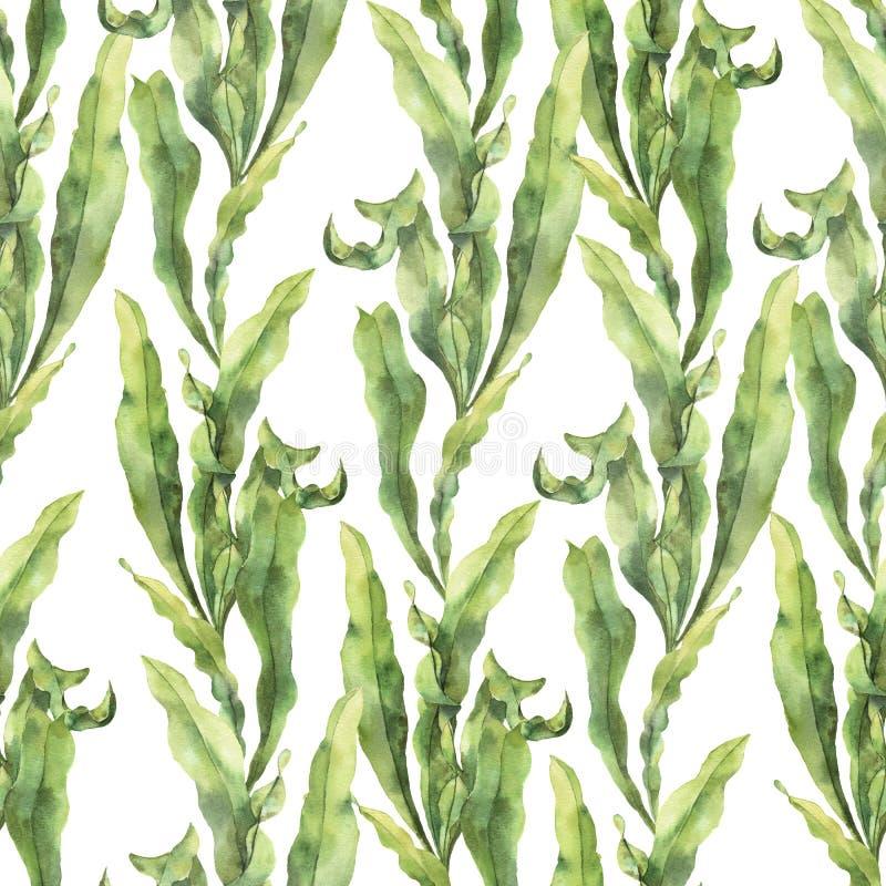 与昆布属植物的水彩无缝的样式 与海藻的手画水下的花卉例证离开分支 皇族释放例证