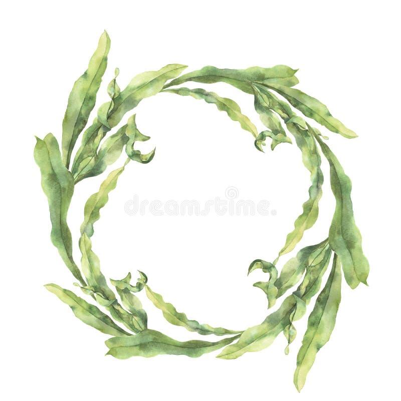 与昆布属植物的水彩花圈 与海藻的手画水下的花卉例证在白色留给分支被隔绝 皇族释放例证