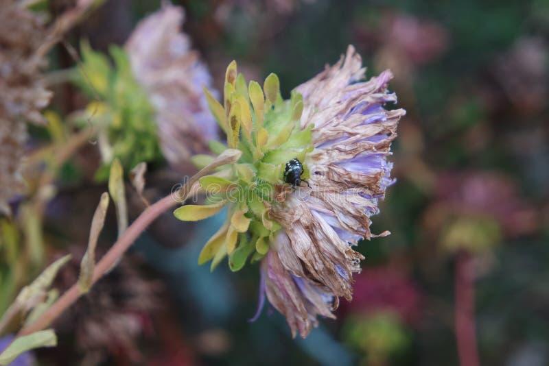 与昆虫的一朵花 免版税图库摄影