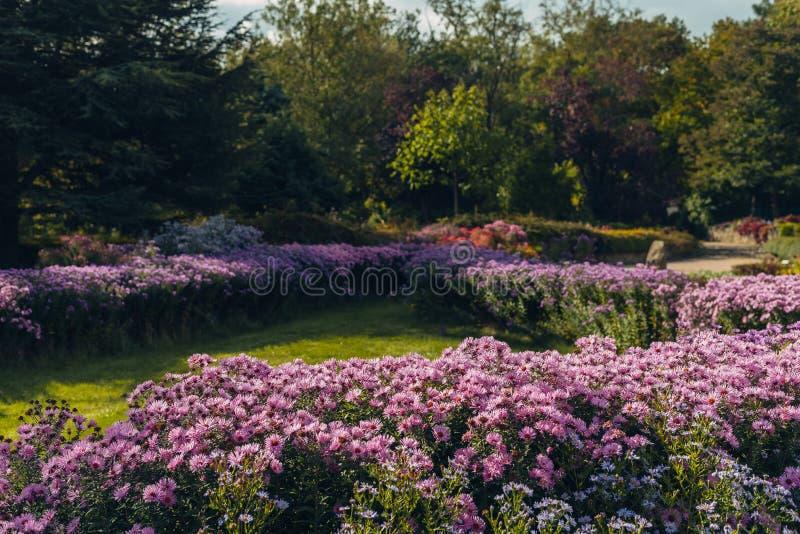 与明亮的五颜六色的花的花床在庭院里 免版税库存图片