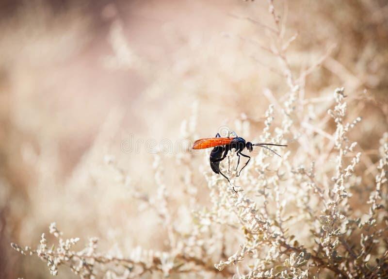 与明亮的橙色翼的昆虫 库存图片