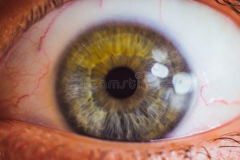 与明亮的红色动脉的大开肉眼关闭  眼珠的激怒和赤红 学生,虹膜,在宏指令的睫毛 免版税库存图片