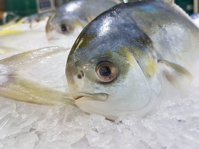 与明显地眼睛的大鲜鱼 库存照片