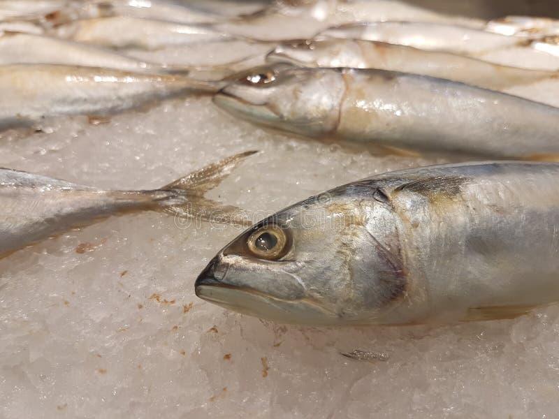 与明显地眼睛的新鲜的鲭鱼 图库摄影