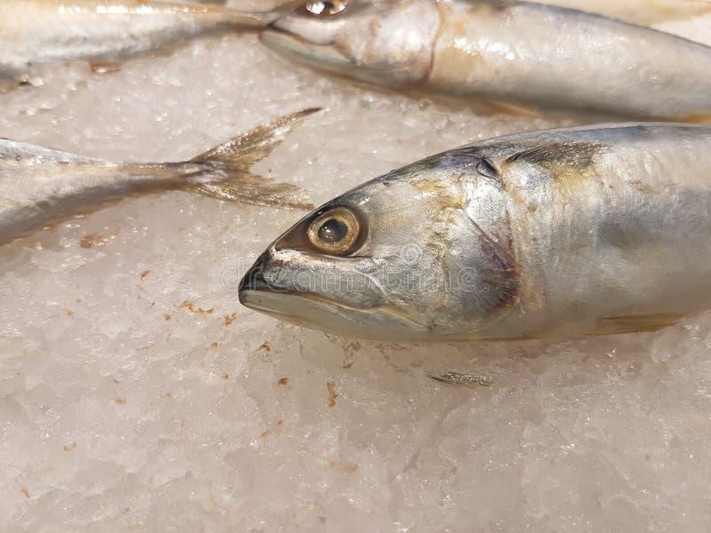 与明显地眼睛的新鲜的鲭鱼 免版税库存图片
