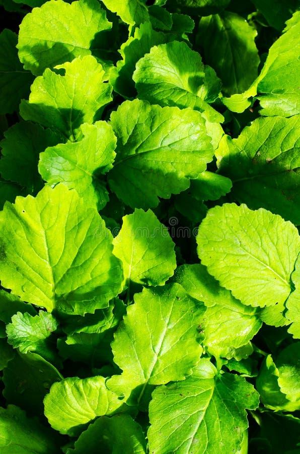与春天绿色的种子自温室 库存图片